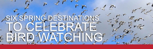 Spring Bird Migrations