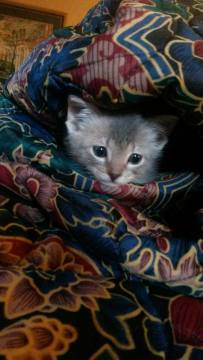 gracie cat