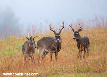 Six Great National Parks to See Wildlife   Coach-Net