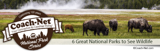 National Park Wildlife