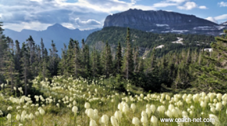 Beargrass Superbloom