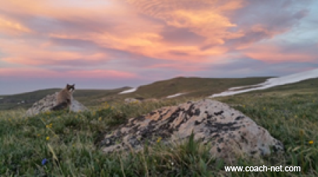 Lily and a sunset - Beartooth Highway