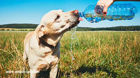 thirsty dog