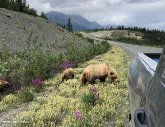 bear aware Alaska