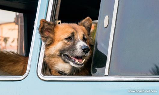 Dog In RV