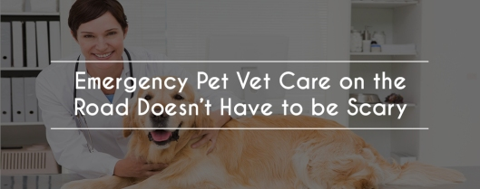 Emergency Pet Vet Care on the Road Doesn't Have to be Scary