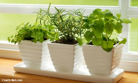 RV Plants