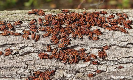 Bugs On Log