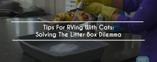 Tips for RVing with Cats: Solving the Litter Box Dilemma
