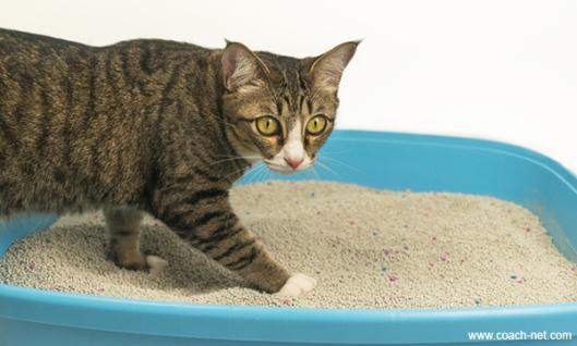 Cat stepping in litter box