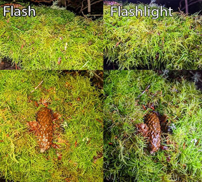 Using Flash vs. Flashlight